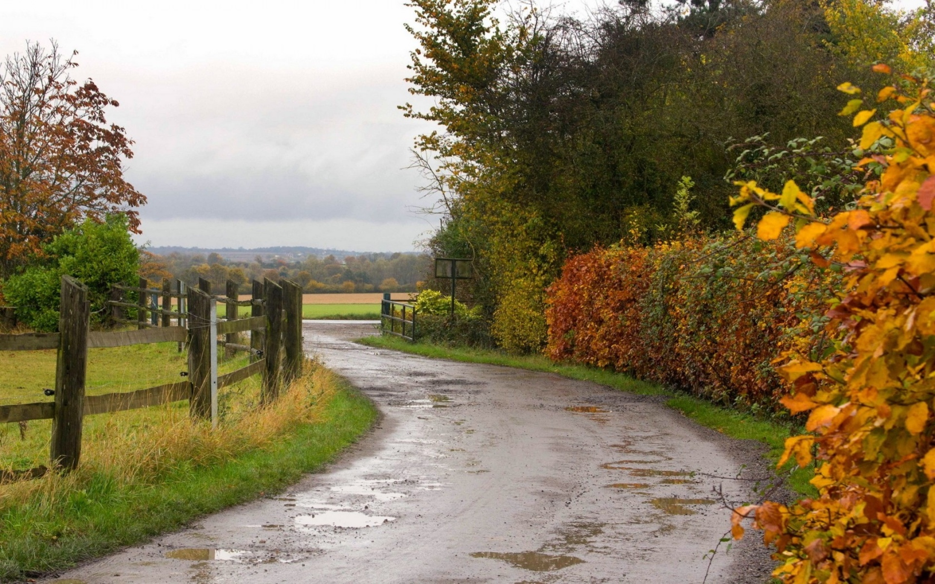 roads autumn fall rain wet water reflection fence landscapes trees