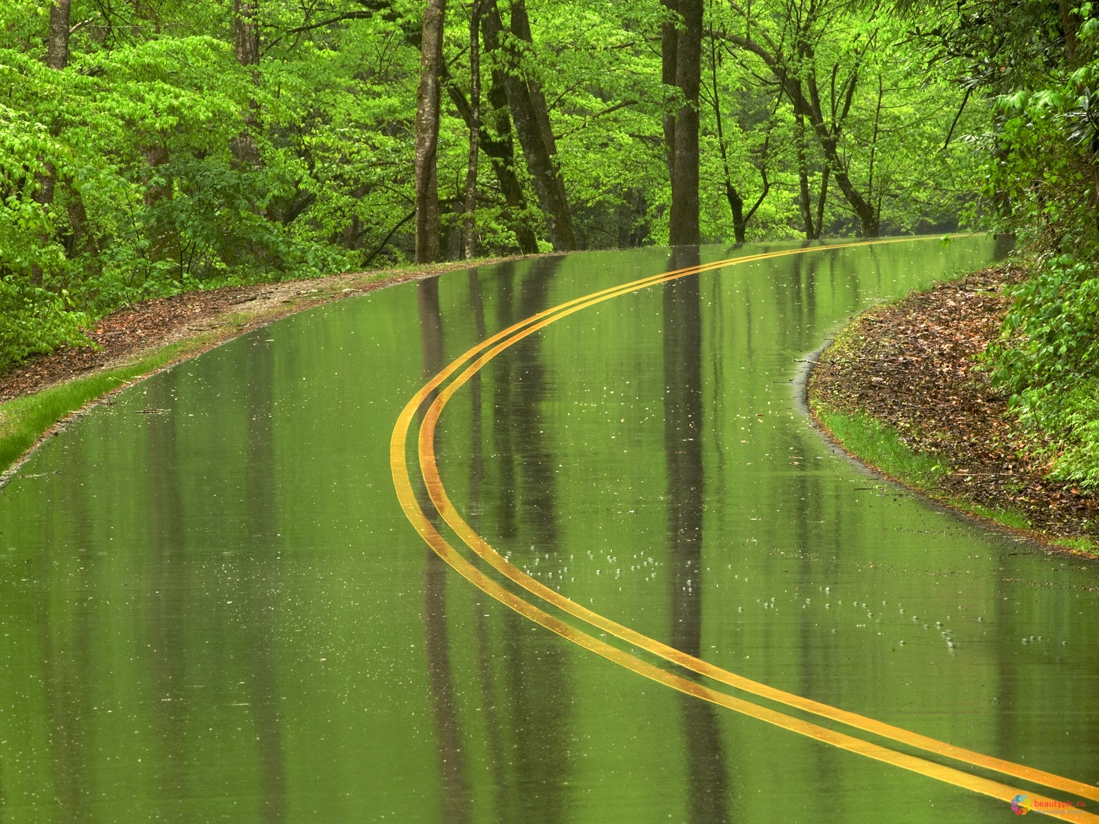 roads wet rain trees forest