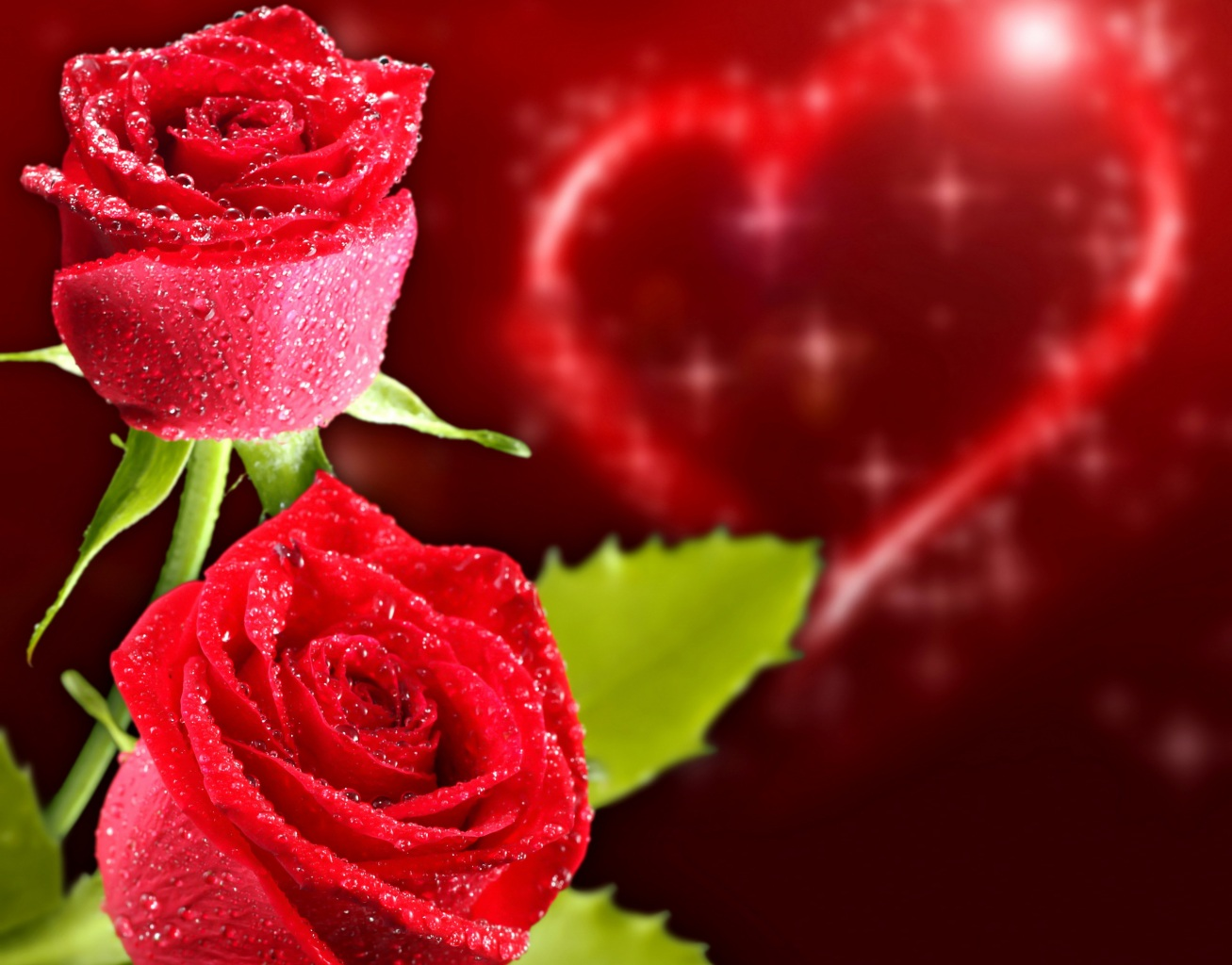 Roses Closeup Holidays Heart Red Flowers
