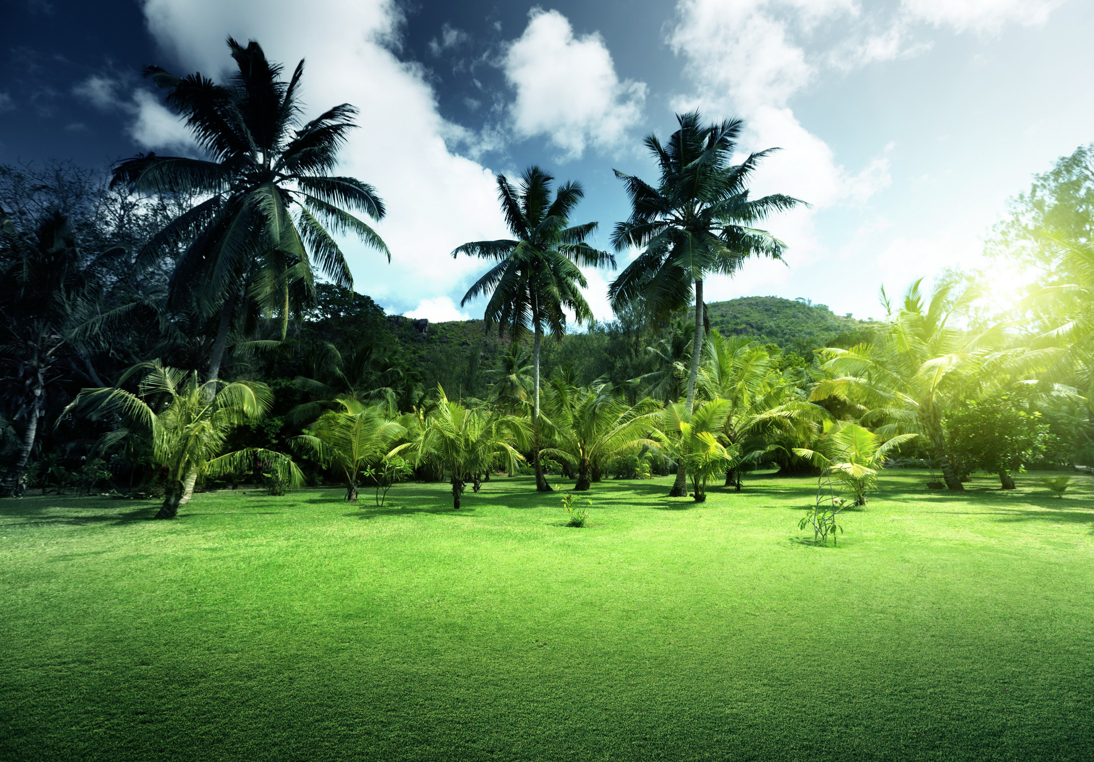 Scenery Sky Grass Palm Nature