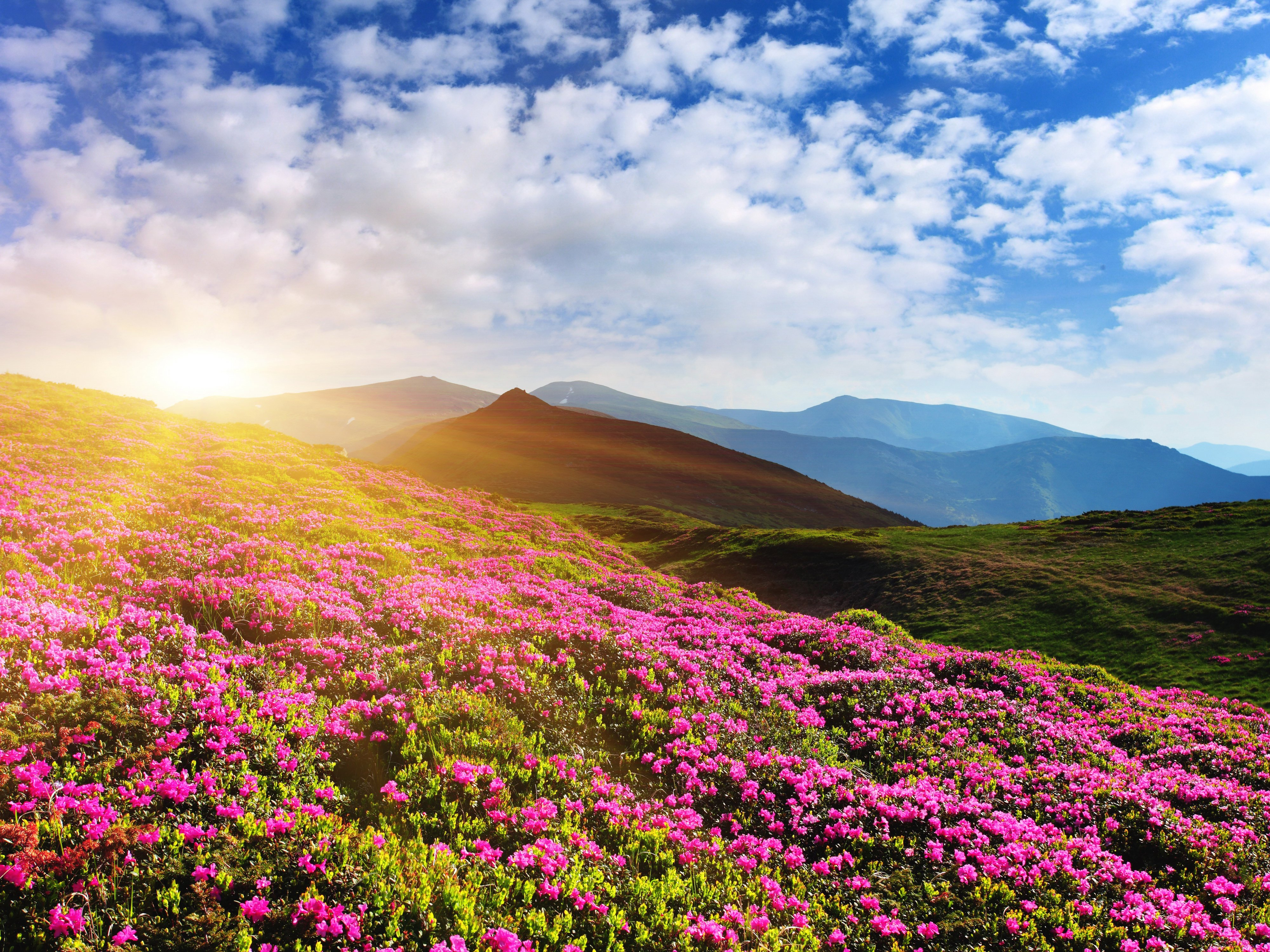 Scenery Sunrises and sunsets Mountains Azalea Sky Nature
