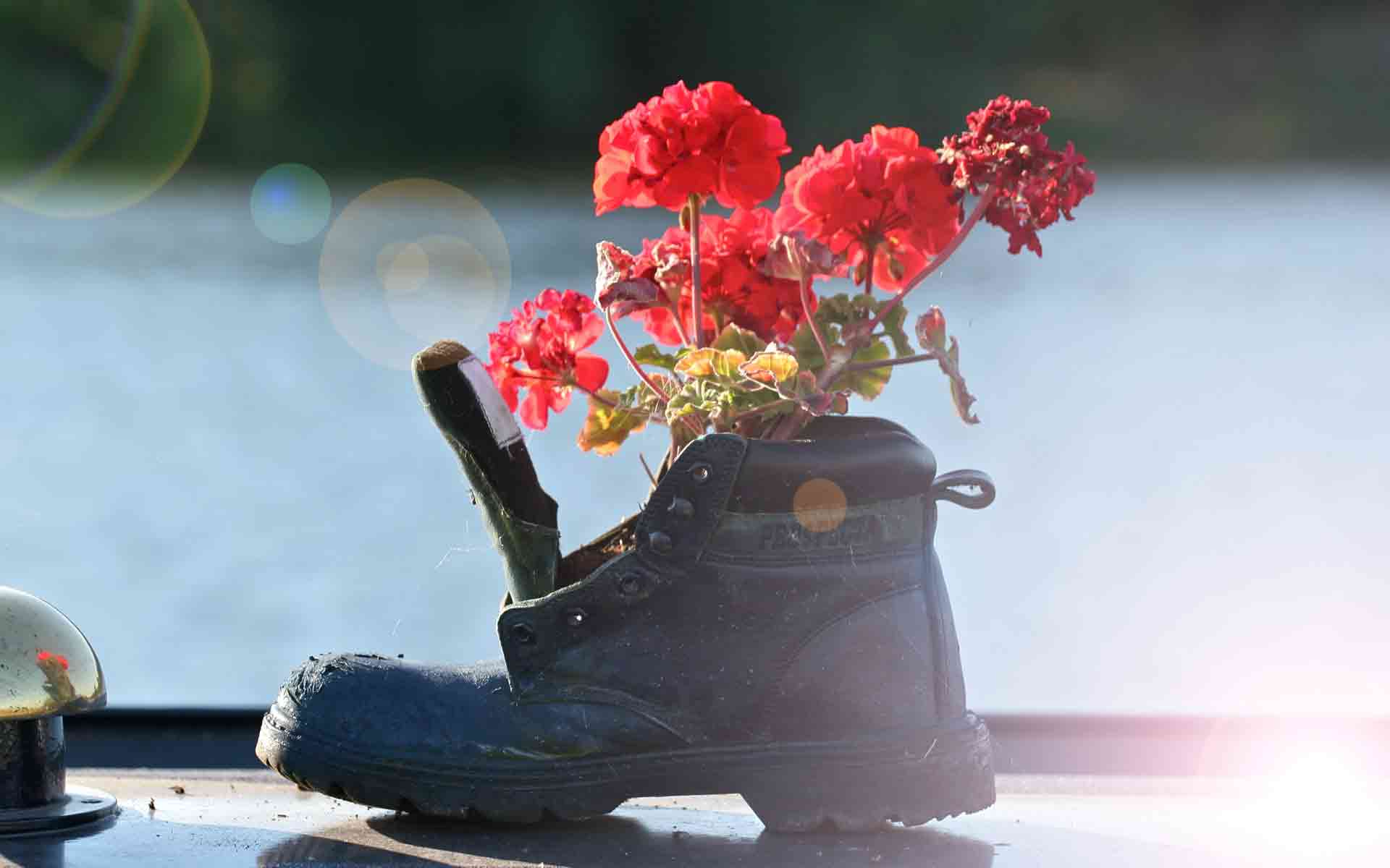 Shoe and flowers