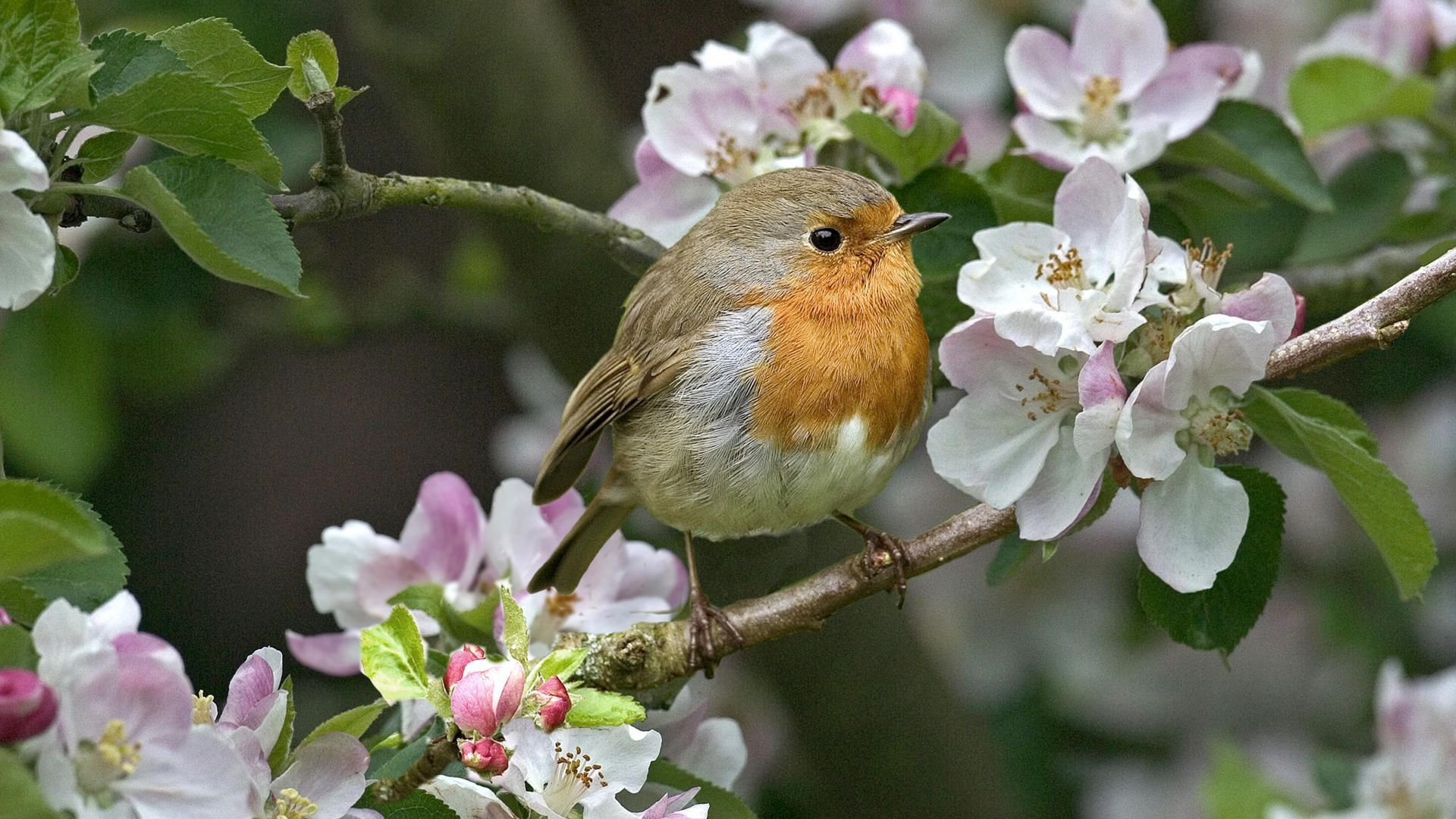 Small bird on the blossoming tree