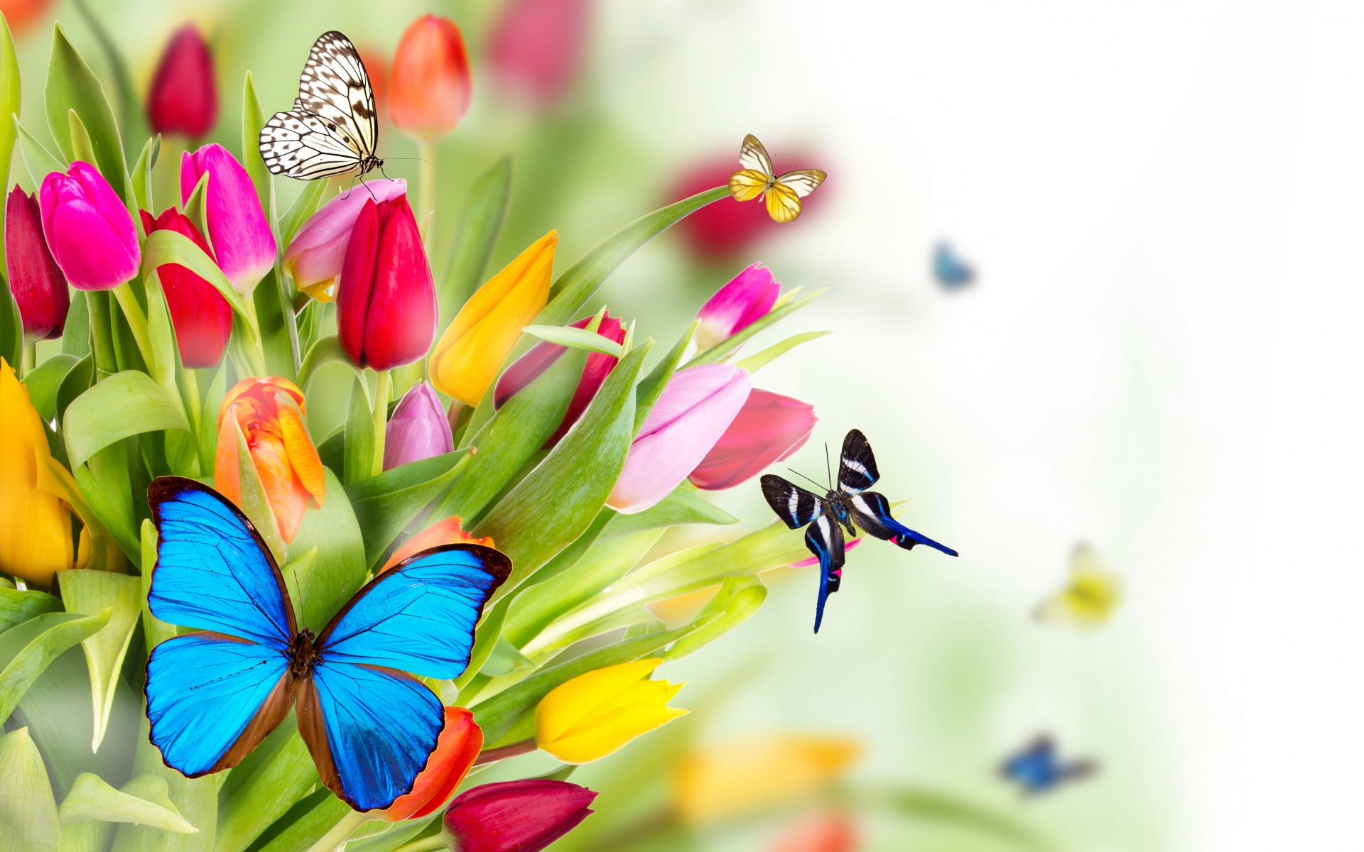 spring flowers tulips butterflies bokeh art summer