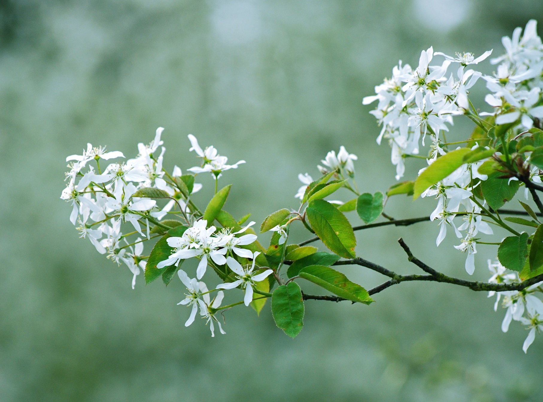 string printemps tree campaign season nature landscapes wallpapers insects flowers