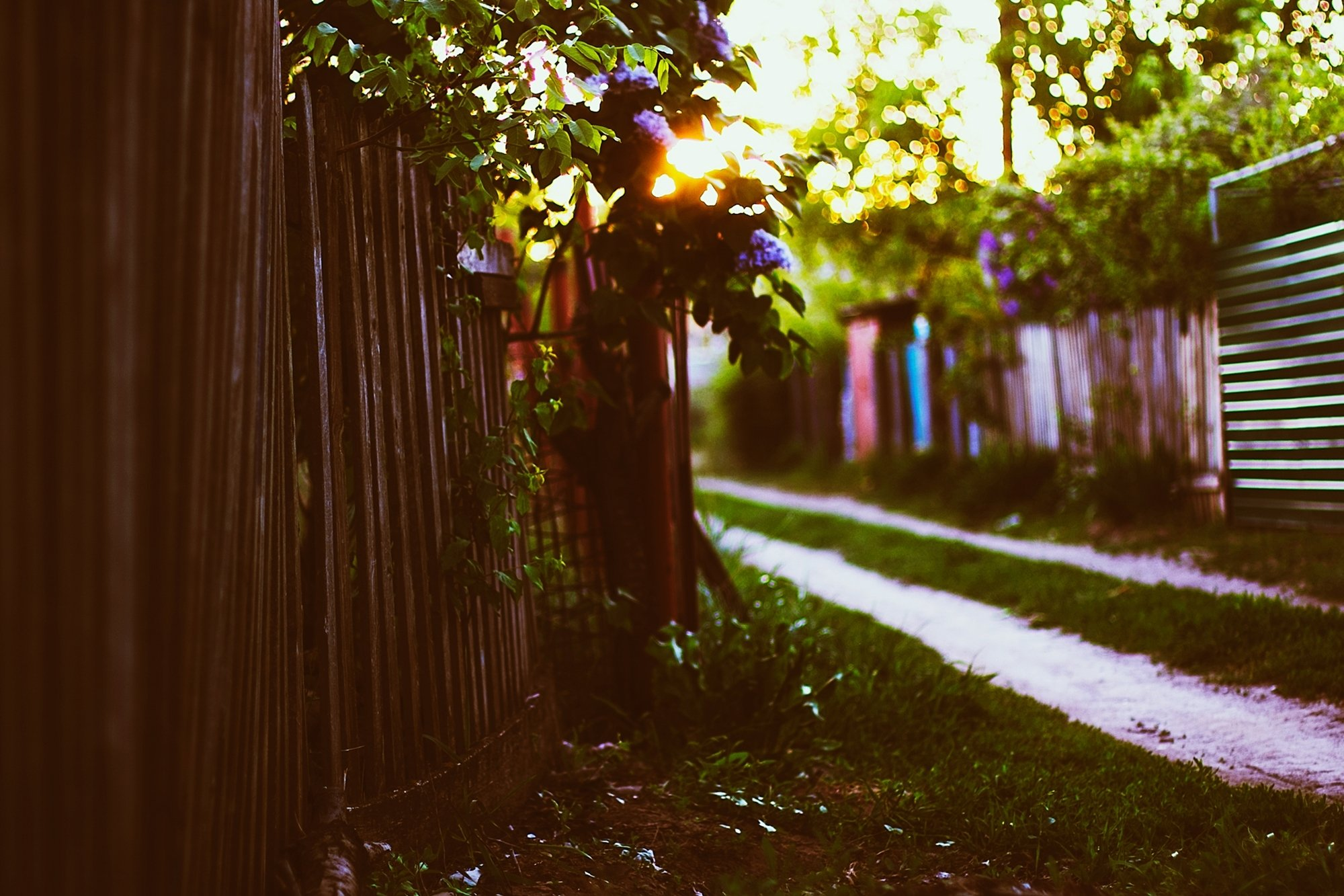 sunset fence house grass leaves spring sun bokeh lilac