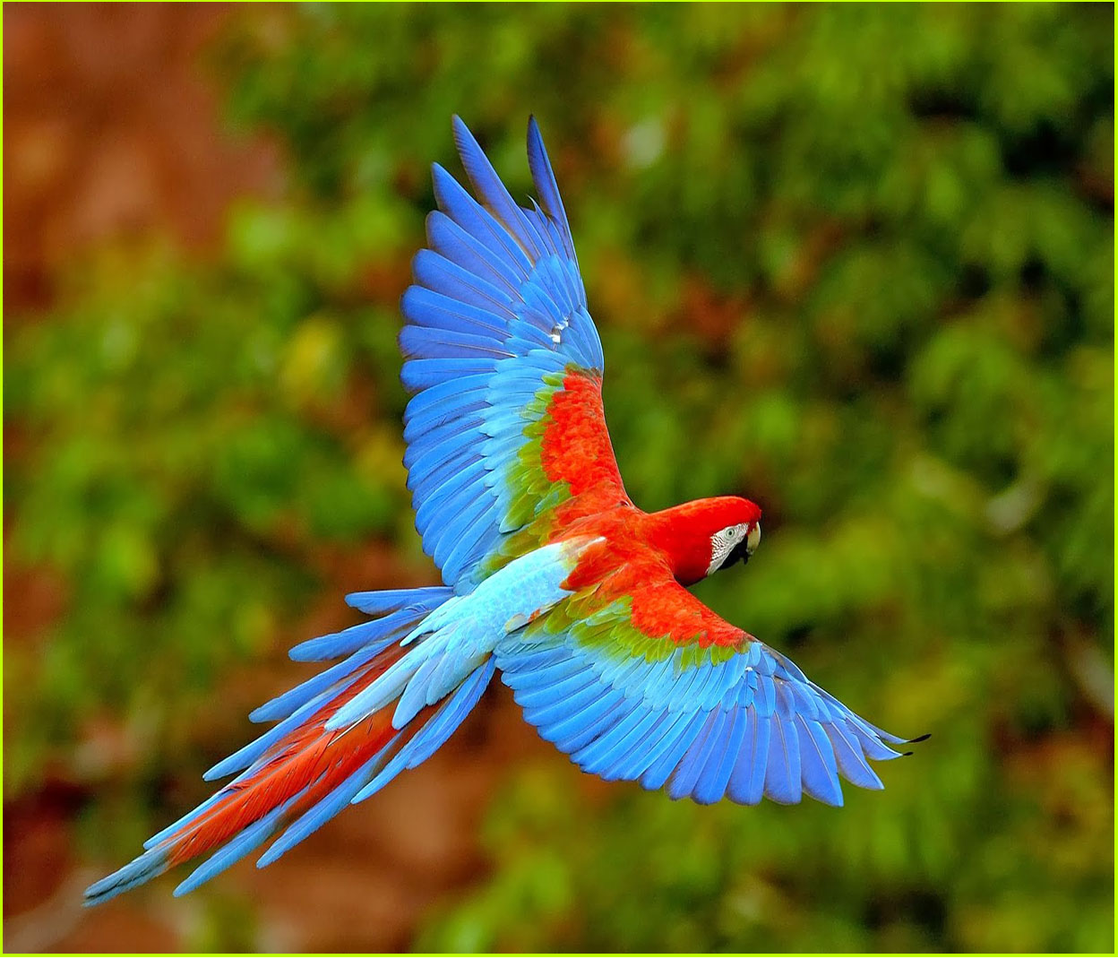The most awesome bird in the world