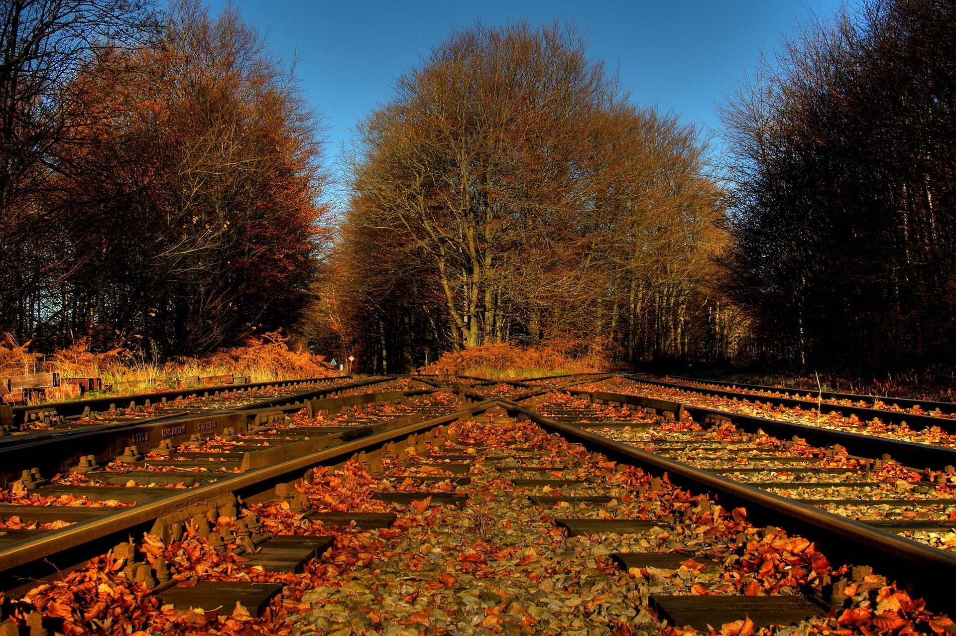 trees foliage leaves railroad tracks crossing road autumn