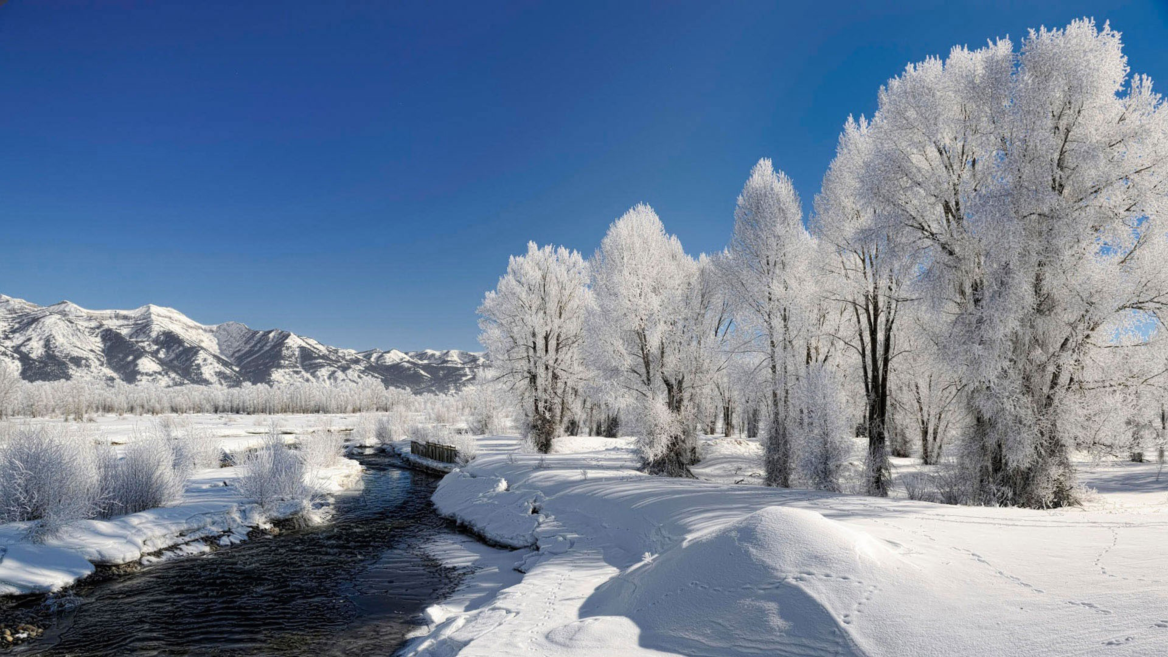 Trees Hoarfrost Winter River Source Current Day