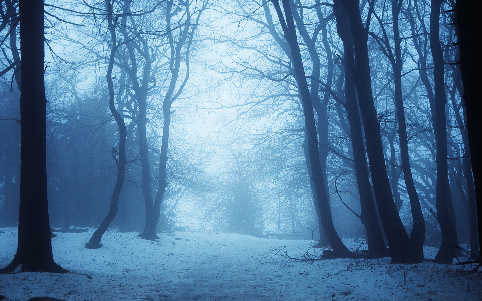 trees snow landscape forest winter fog