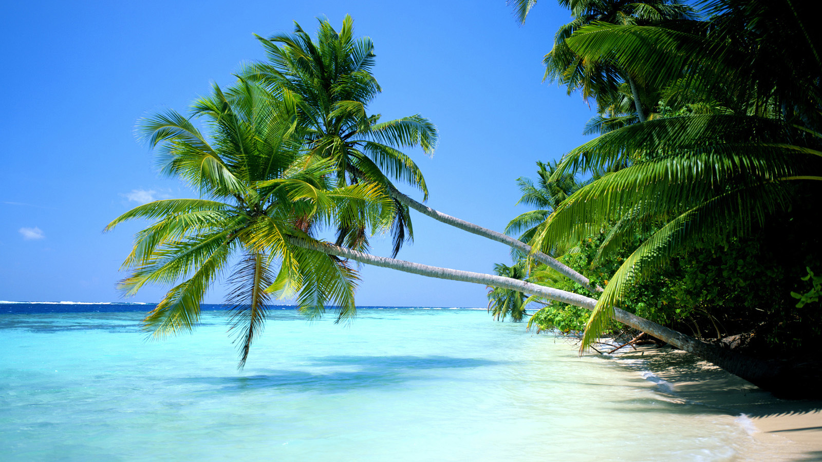 Tropical Beach Screensavers