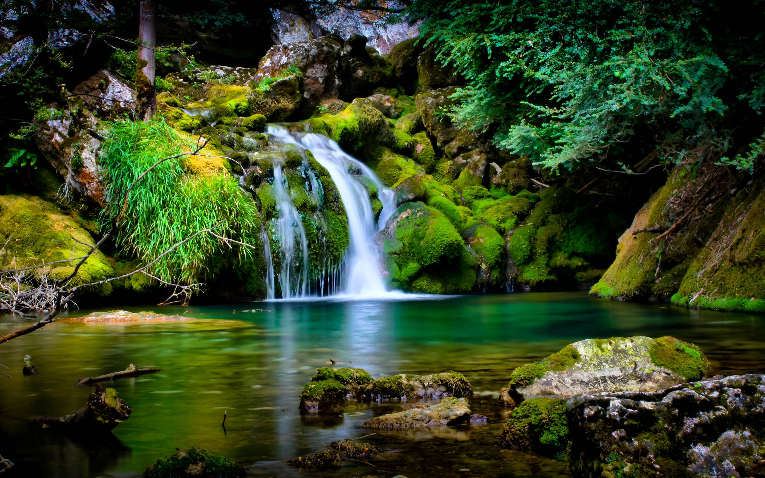Vercors forest fall