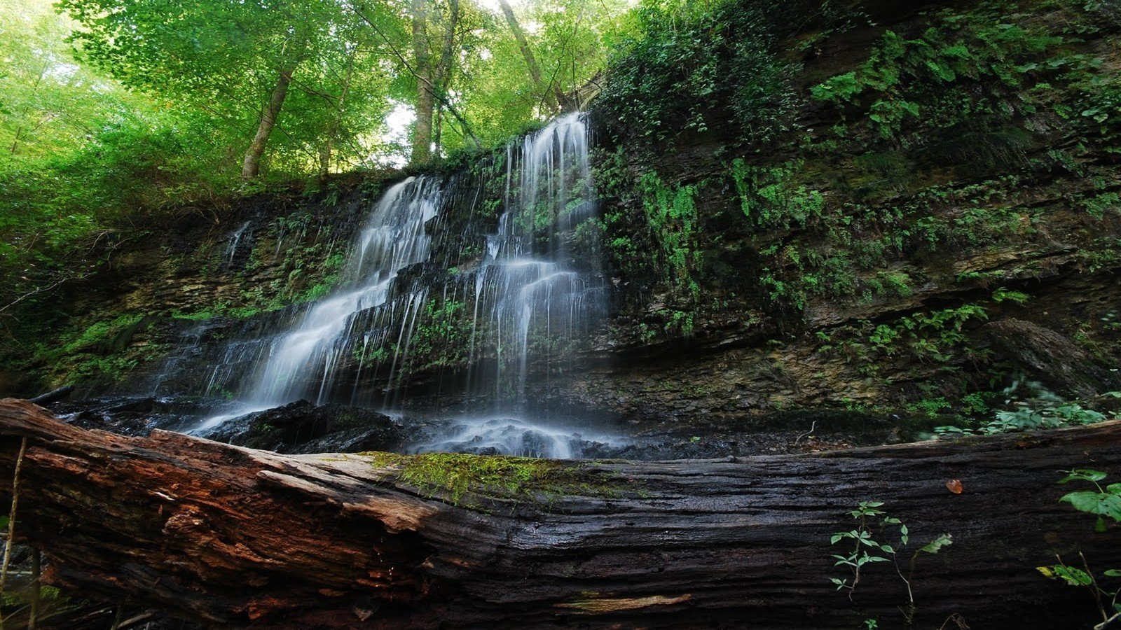 water landscapes nature trees forests rocks plants Tennessee waterfalls state
