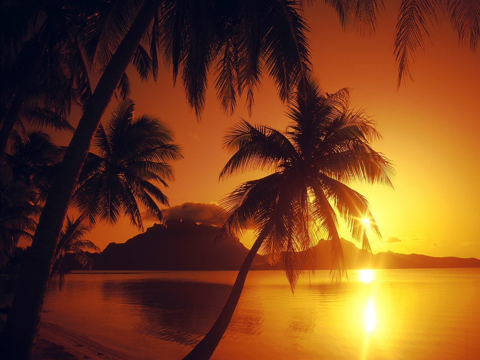 water sunset shore palm trees beaches