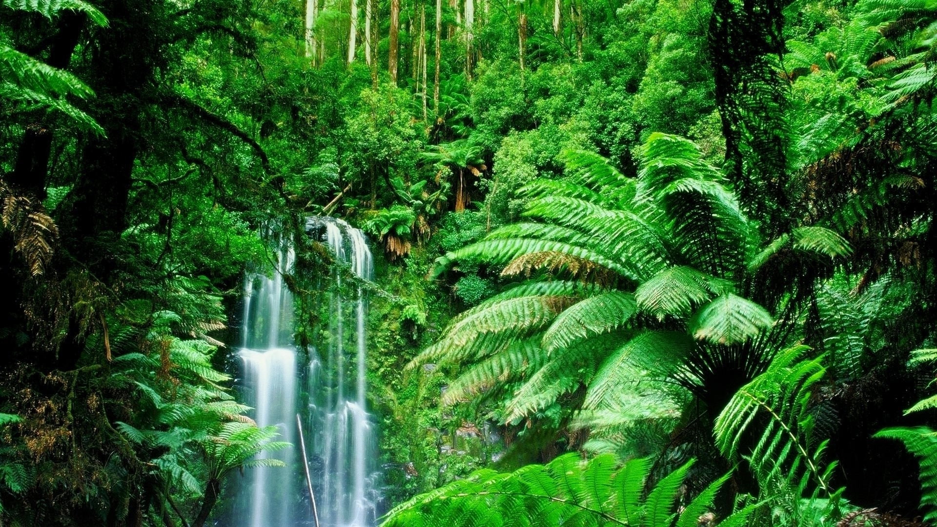 Waterfall Jungle Trees forest