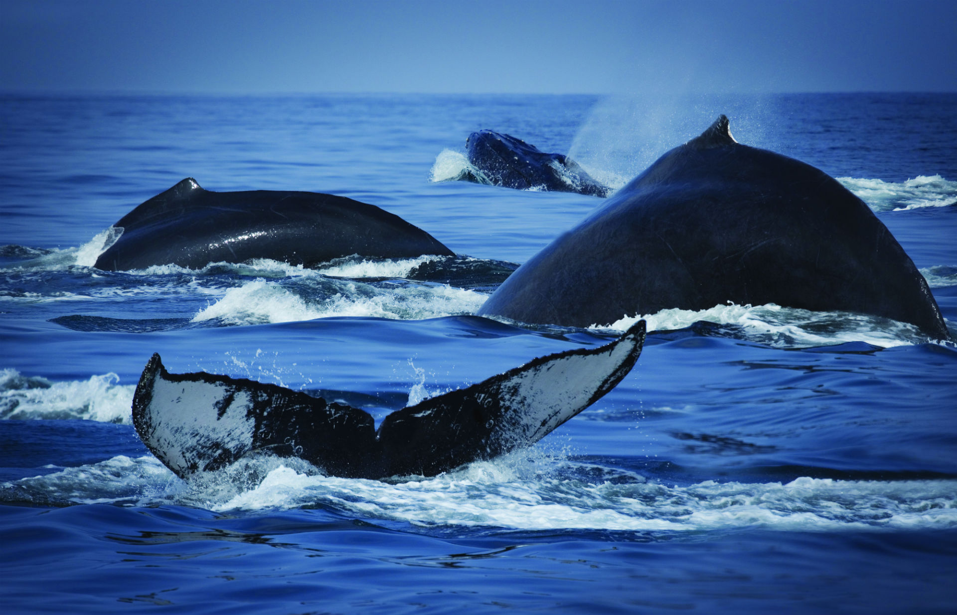 whales sea nature