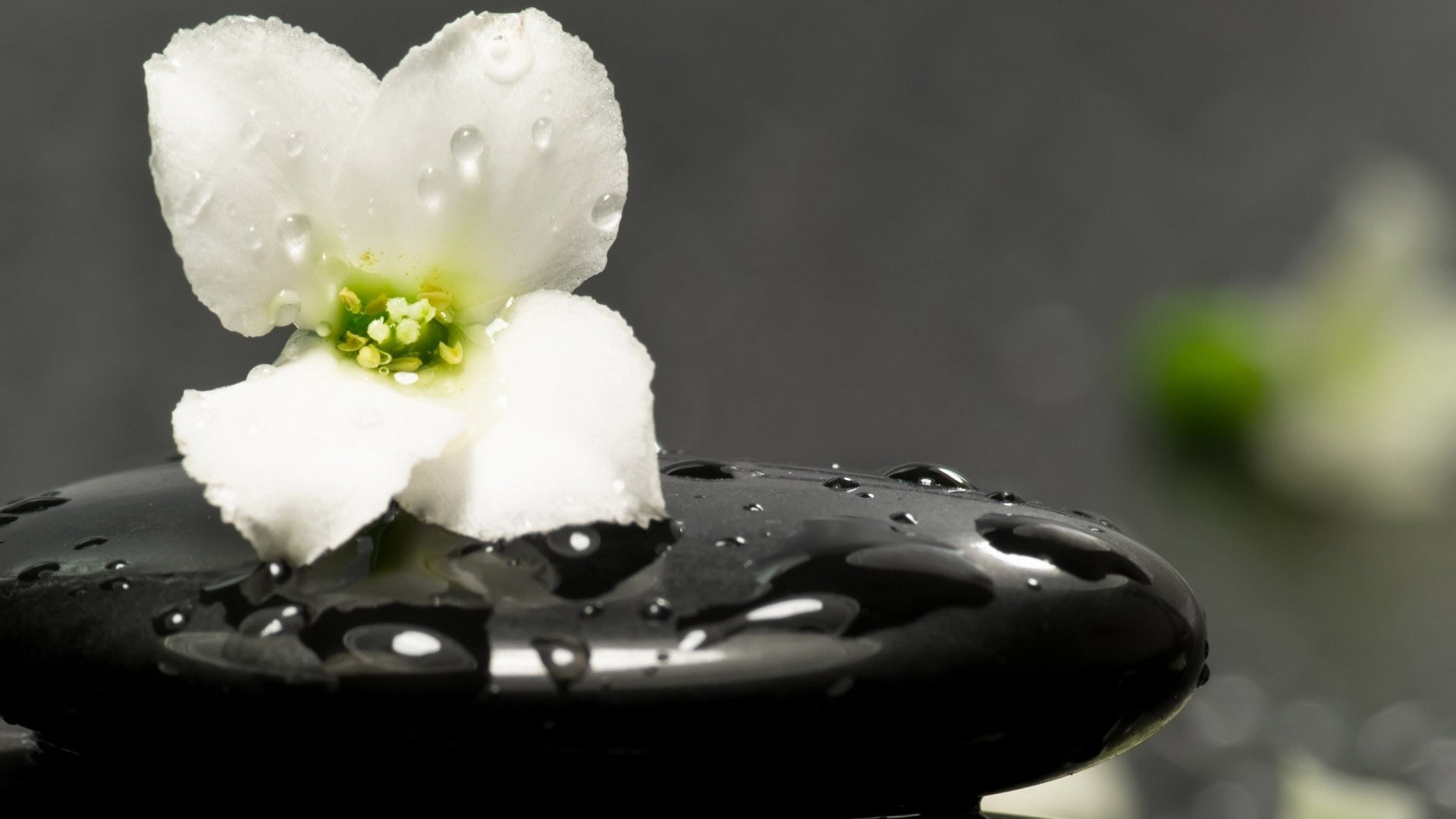 White flower on a spa stone
