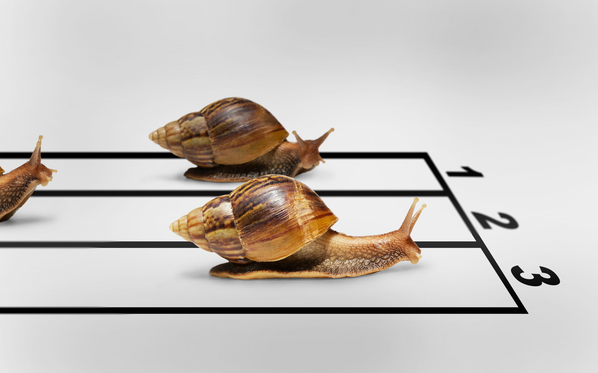 winner humor race Snails finish