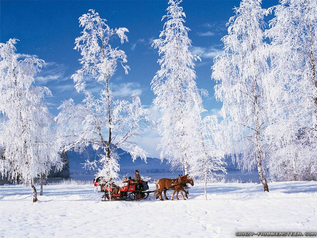 Winter Scenery