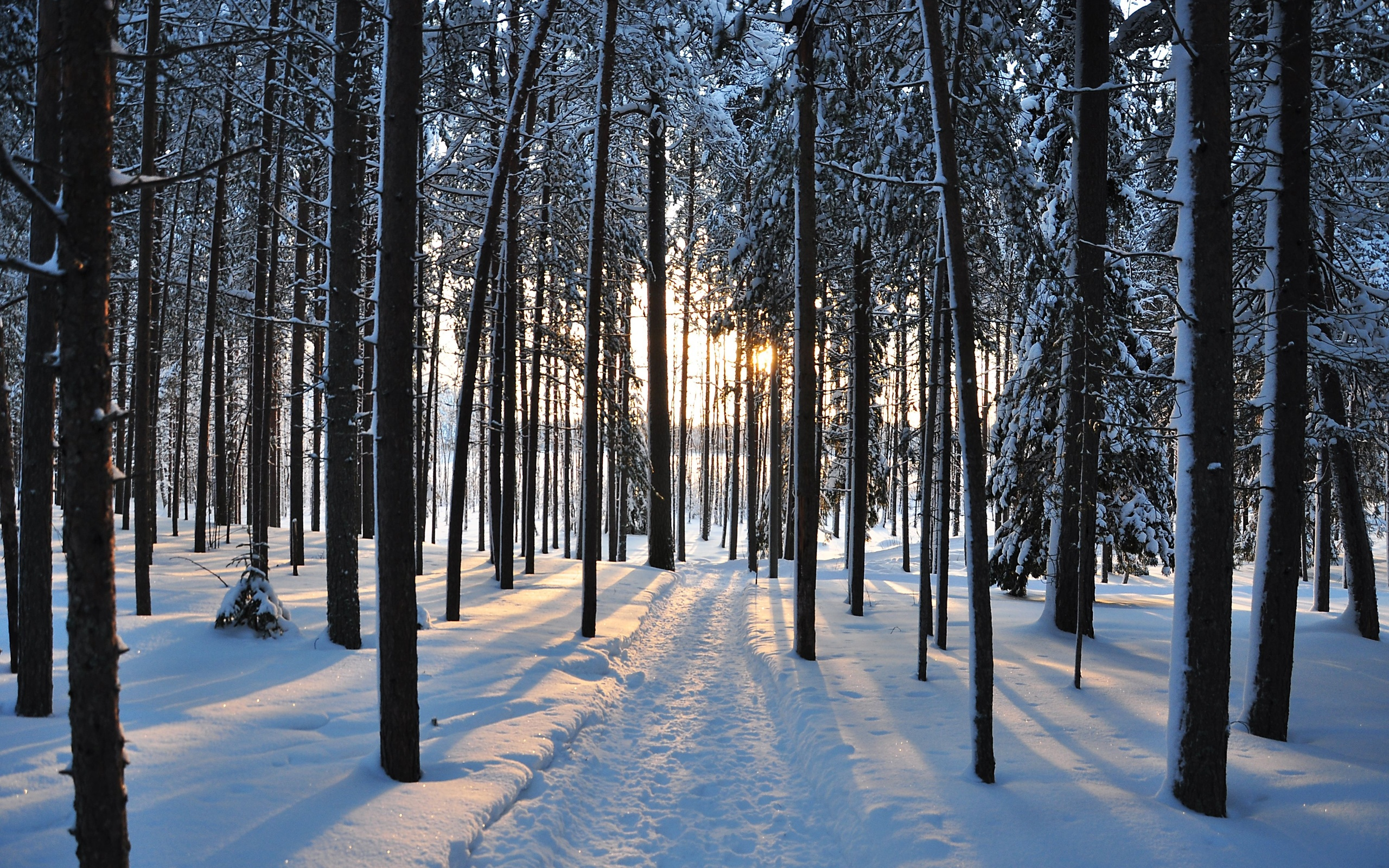 winter trees forest road nature landscape     h