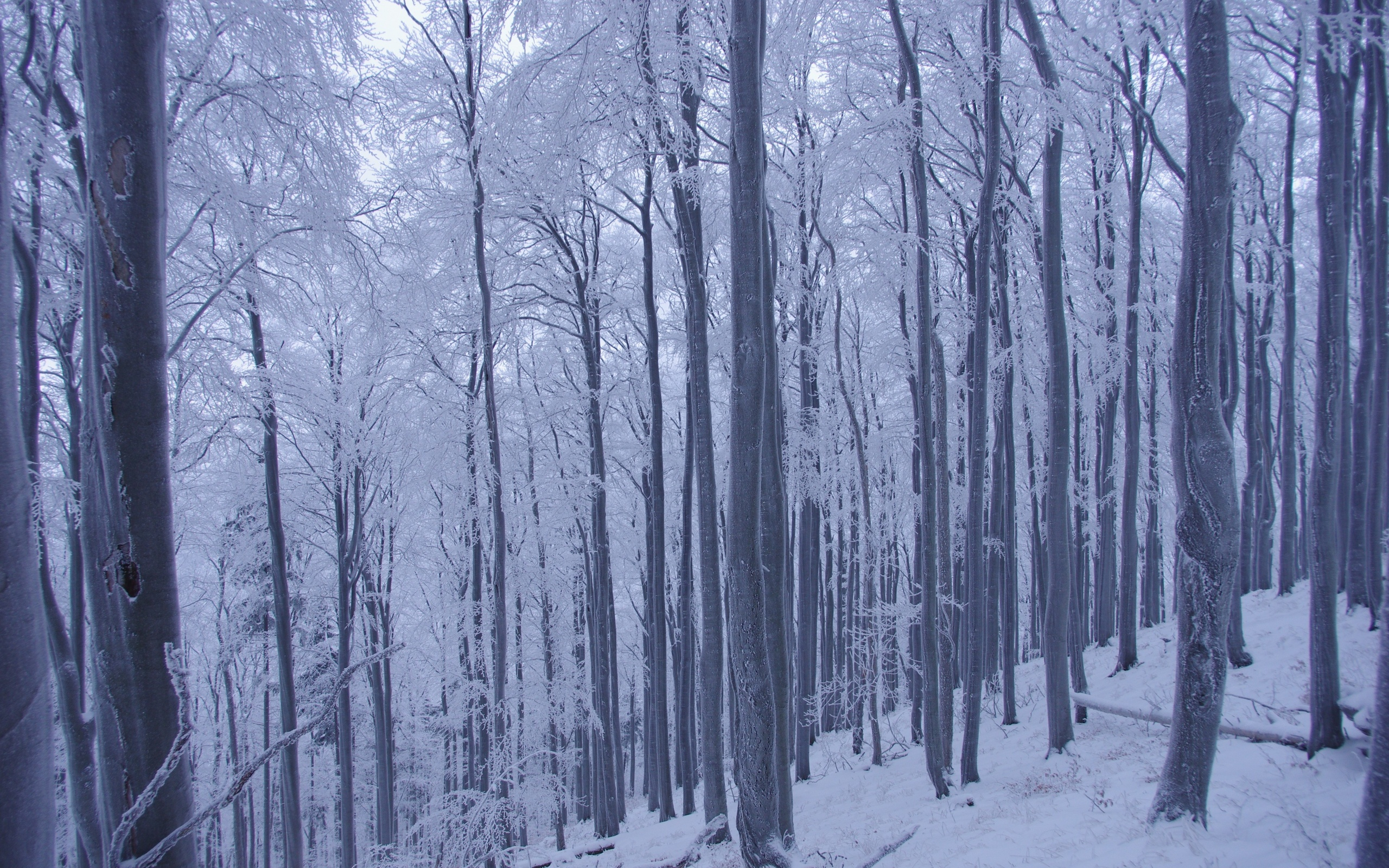winter trees forest snow landscape
