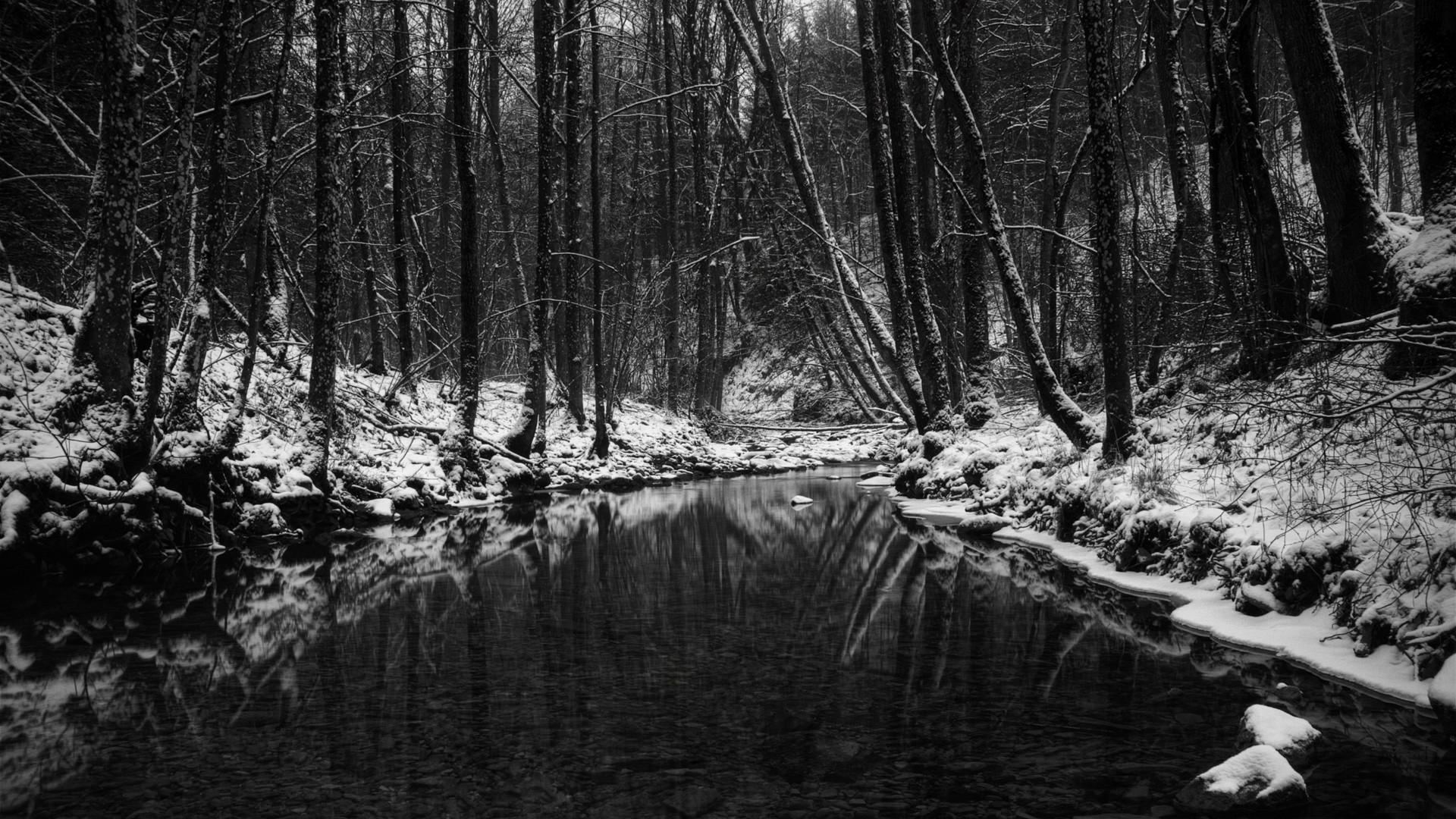 winter trees monochrome rivers