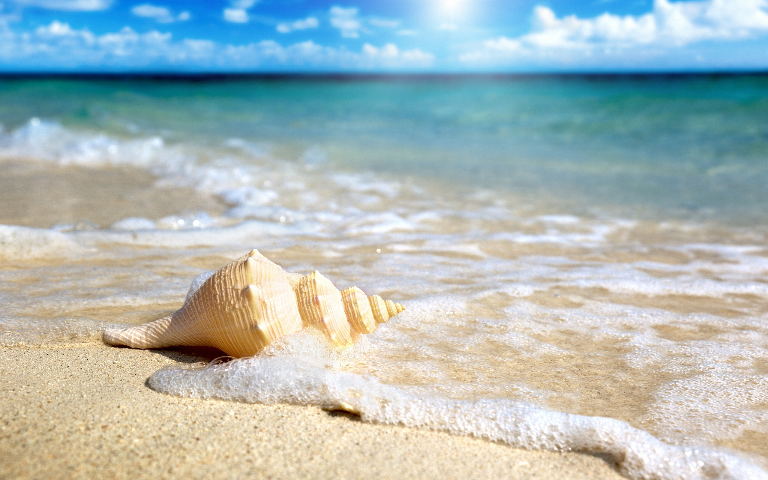 Wonderful Beach Shell