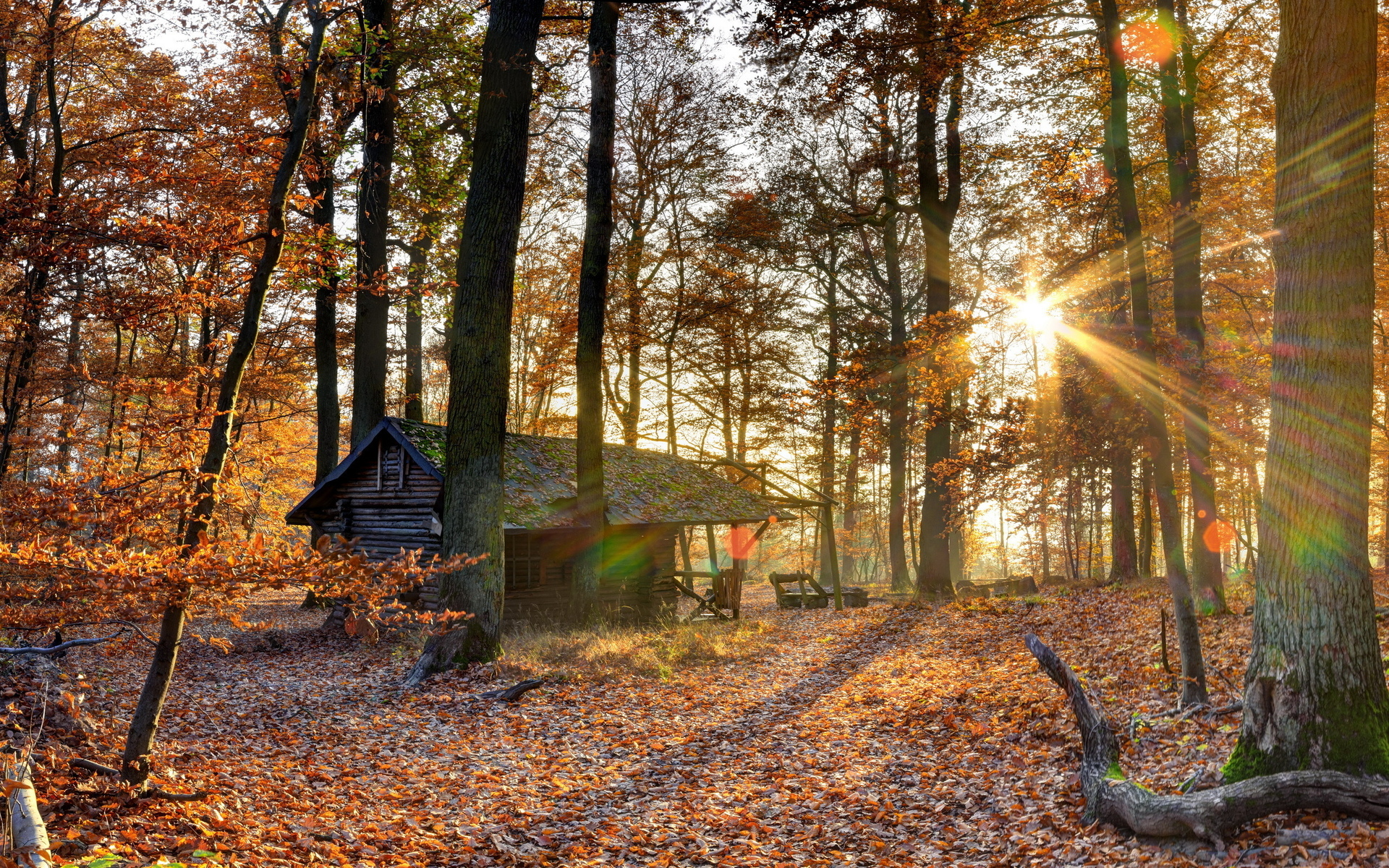 world architecture buildings houses rustic decay ruins nature landscapes trees forest fall autumn seasons leaves color sunlight sunbeam sun sunrise sunset