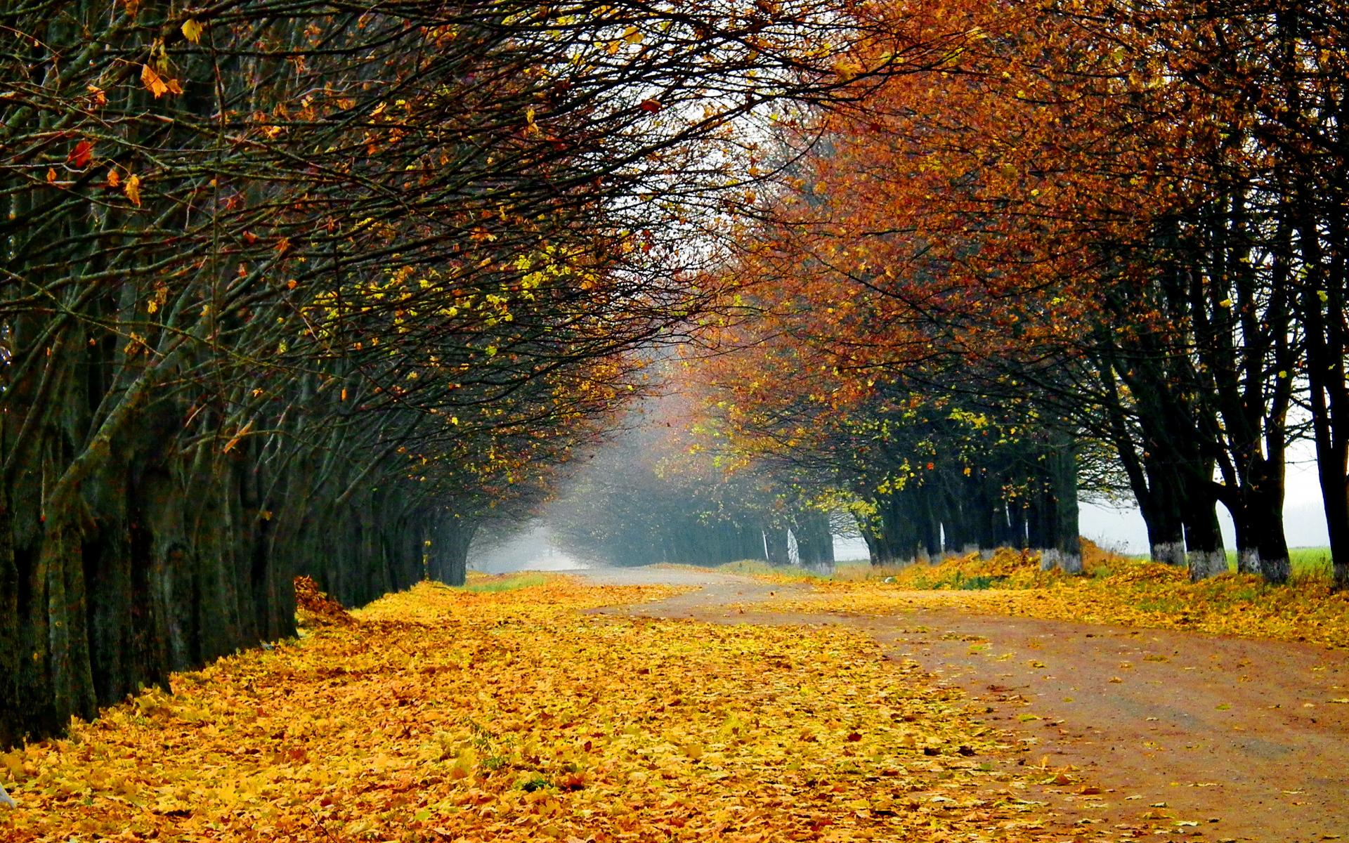 world roads street path trail nature landscapes trees garden park leaves autumn fall seasons