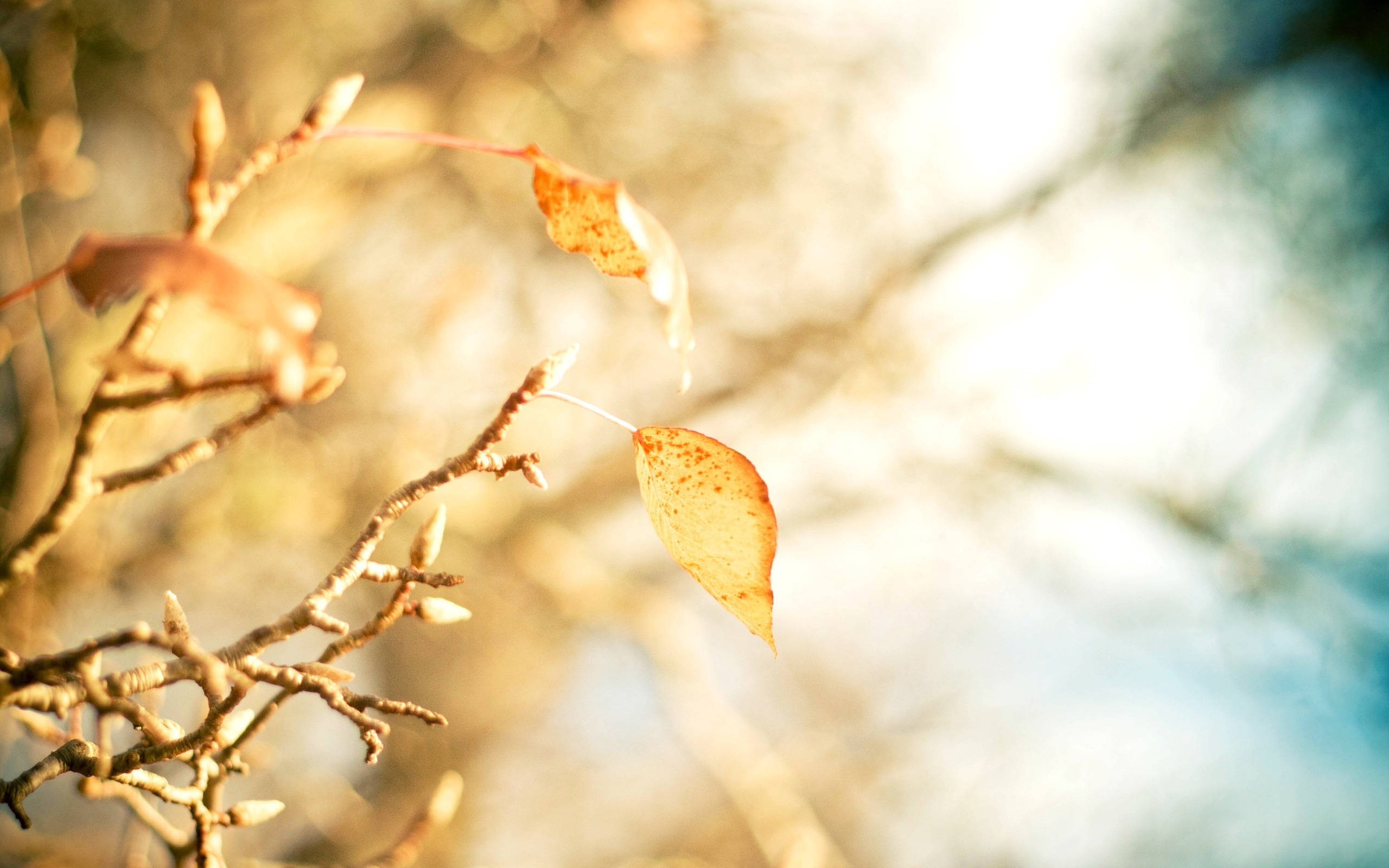 yellow leaves branch close up leaves bokeh autumn